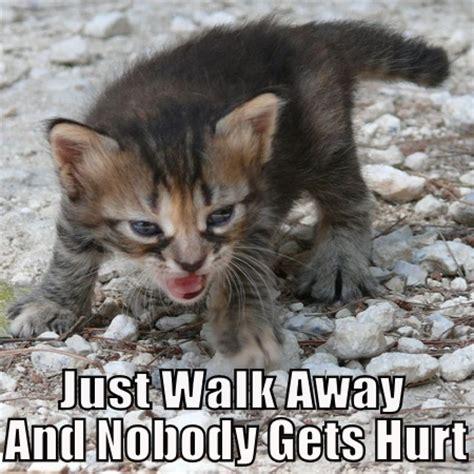 Walk Away Meme - top 20 funniest angry cat memes