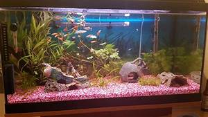 Aquarium 120l Mit Unterschrank : bis 200l 120l 128 liter aquarium besatz harmonie pflanzen aquarium forum ~ Frokenaadalensverden.com Haus und Dekorationen