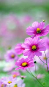Hd Backgrounds For Phone Page Of Wallpaper Pink Flower ...