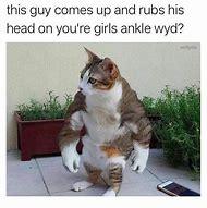 Cursed Crying Cat Meme
