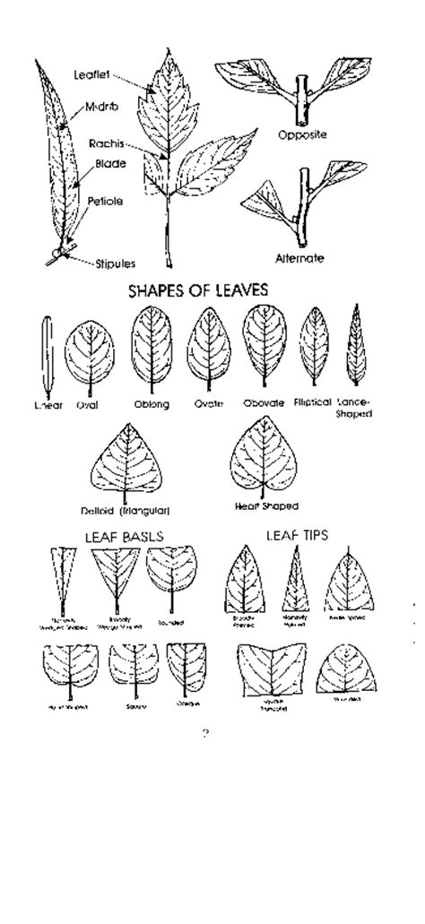 plant information center nc trees identification page
