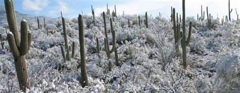 family and activities at tucson parks 191 | sabino cactus snow