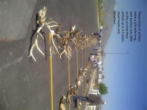 utah division wildlife resources antler auction 5 8 2012