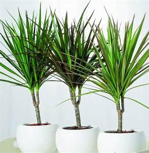 Zimmerpflanzen Pflegeleicht Sorgen Sie Fr Ein Gesundes