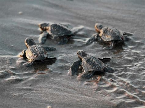 heat ls for baby turtles a startup s odds of success are low business insider