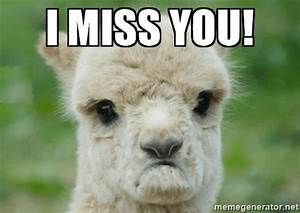 i miss you meme - 28 images - i miss you baby sloth memes ...