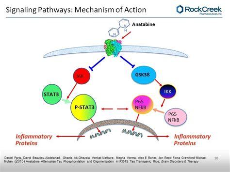 9 Acetylcholine Binding On Alpha 7 Nicotinic Receptor Anatabine Binding On Alpha 7 Nicotinic