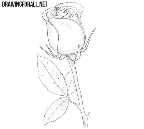 draw  rose easy drawingforallnet