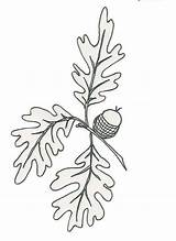 Oak Drawing Leaf Pages Leaves Drawings Patterns Coloring Fall Blm Silhouette Lg Rounded Pixels Things sketch template