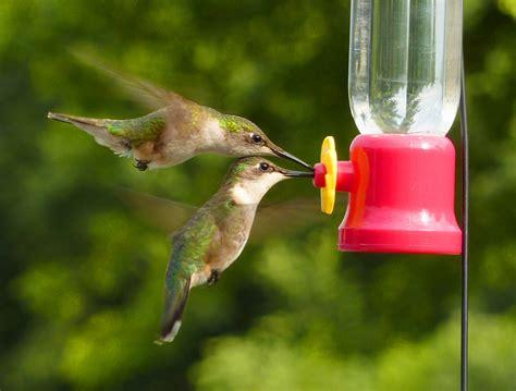 ten  easy tips  attract hummingbirds bird watcher