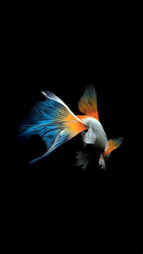 fondos de pantalla de peces wallpaper de peces