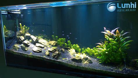 lumini glisten 150r2 aquarium plant lighting lumini 183 shop