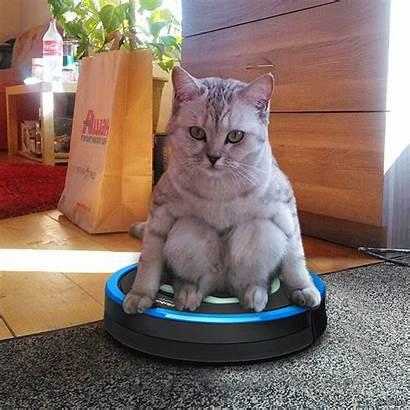 Cat Reddit Sitting Roomba Weird Kitty Position