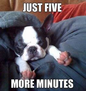 cute dogs with captions | Michael Bradley - Time Traveler