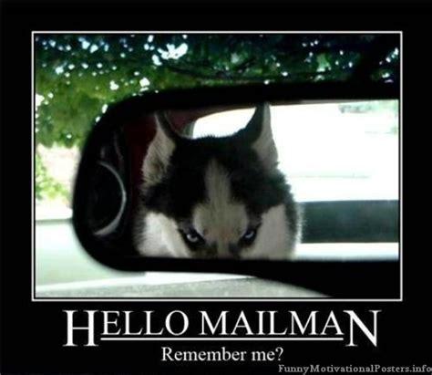 Funny Husky Memes - funny evil dog the best medicine pinterest