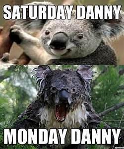 Angry Koala Bear Meme | www.imgkid.com - The Image Kid Has It!