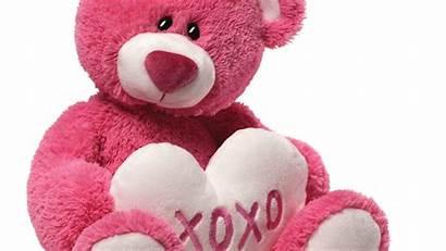 Bear Teddy Drive Ufcw Local Network Pink