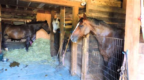 barn horses music