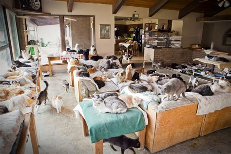 The Cat House by 260 Cats Taken From Home Of Obsessed With Cats