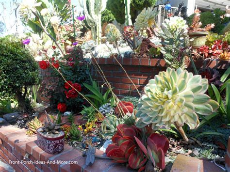 succulent garden designs pictures of succulents front