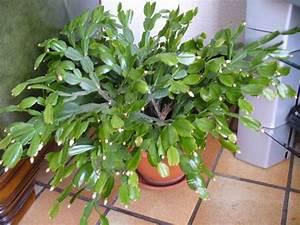Entretien Plantes Grasses : mes plantes grasses ~ Melissatoandfro.com Idées de Décoration