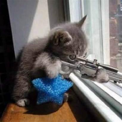 Terrorist Funny Cat Funniest Ever