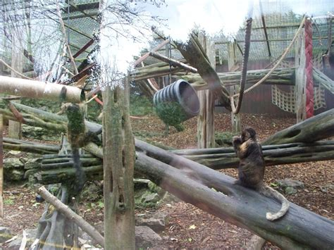 capuchin cages monkeys housing bear zoochat dean dec