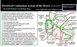 Electrical Conduction System Of The Heart  Anatomy Part Iv