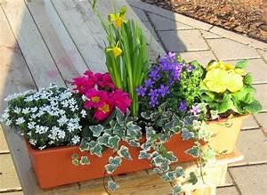 Winterharte Pflanzen Für Balkonkästen : bepflanzter fr hlings balkonkasten bunt in 3 gr en erh ltlich pflanzen versand f r die besten ~ Orissabook.com Haus und Dekorationen