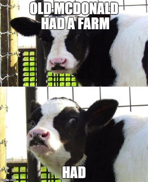 Calves Meme - calves meme 28 images cow meme memes and cow on pinterest 15 best images about funny cows