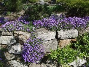 Pflanzen Für Trockenmauer : naturstein trockenmauer bepflanzen geignete pflanzen f r mauerfugen ~ Orissabook.com Haus und Dekorationen