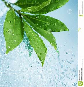 Water Drops And Fresh Green Leaves Stock Image - Image ...