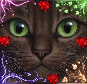 cat fan kitty warrior cats fan 33380841 fanpop