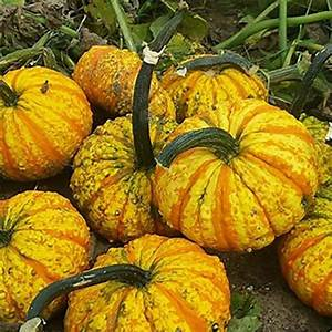 52, Types, Of, Pumpkins, To, Eat, Decorate, And, Display