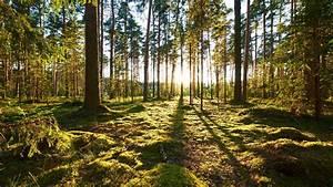 Schadstoffe  Was Wurde Aus Dem Waldsterben