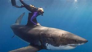 Incredible People  Swimming With Great White Sharks