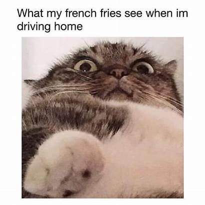 Cat Memes Clean Funny Dog Cold Fresh
