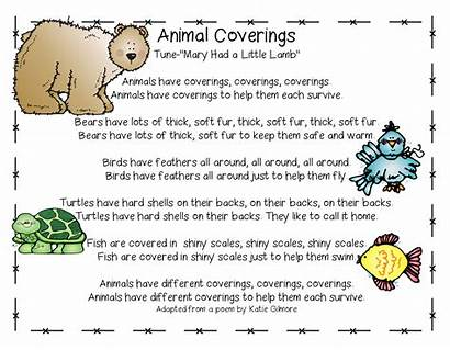Animals Animal Move Grade Coverings Eat Covering