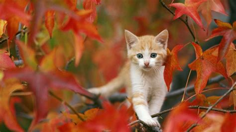 Cat Animated Wallpaper - hd animated fish wallpapers dowload
