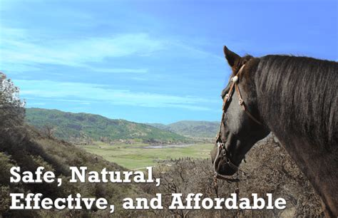 horse calming calm cream serene nature cycles topical naturally seasonal consistently helps during