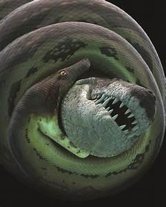 'Titanoboa: Monster Snake' slithers into Morrill Hall Feb ...
