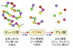 アミノ酸 に対する画像結果
