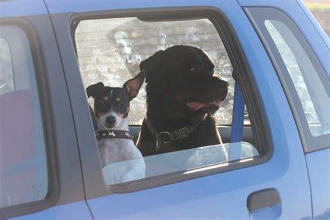 hund im auto transportieren hund sicher im auto transportieren drei m 246 glichkeiten