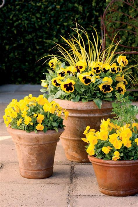 Garden Decoration Pots by 17 Best Ideas About Fall Container Gardening On