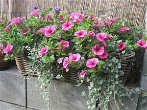 blumenkasten auf die fensterbanke gartengarden With whirlpool garten mit blumenkasten balkon bepflanzen
