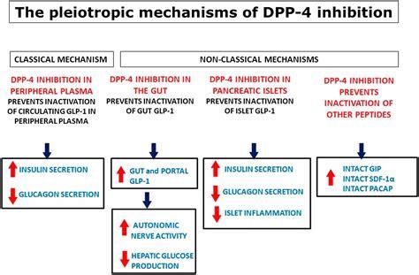 pleiotropic mechanisms   glucose lowering action