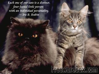 positive cat quotes quotesgram