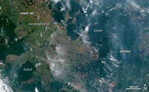 Deforestation Tracked Through Real-Time Satellite ...