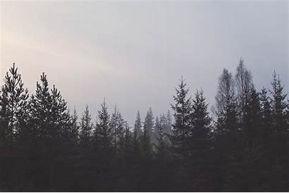 Forest Trees Gray Sky Pines 4k Nature