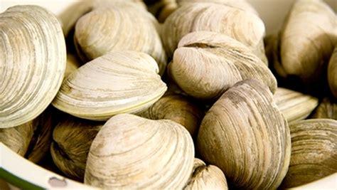 cuisiner des palourdes palourde valeur nutritive bienfaits santé et conservation